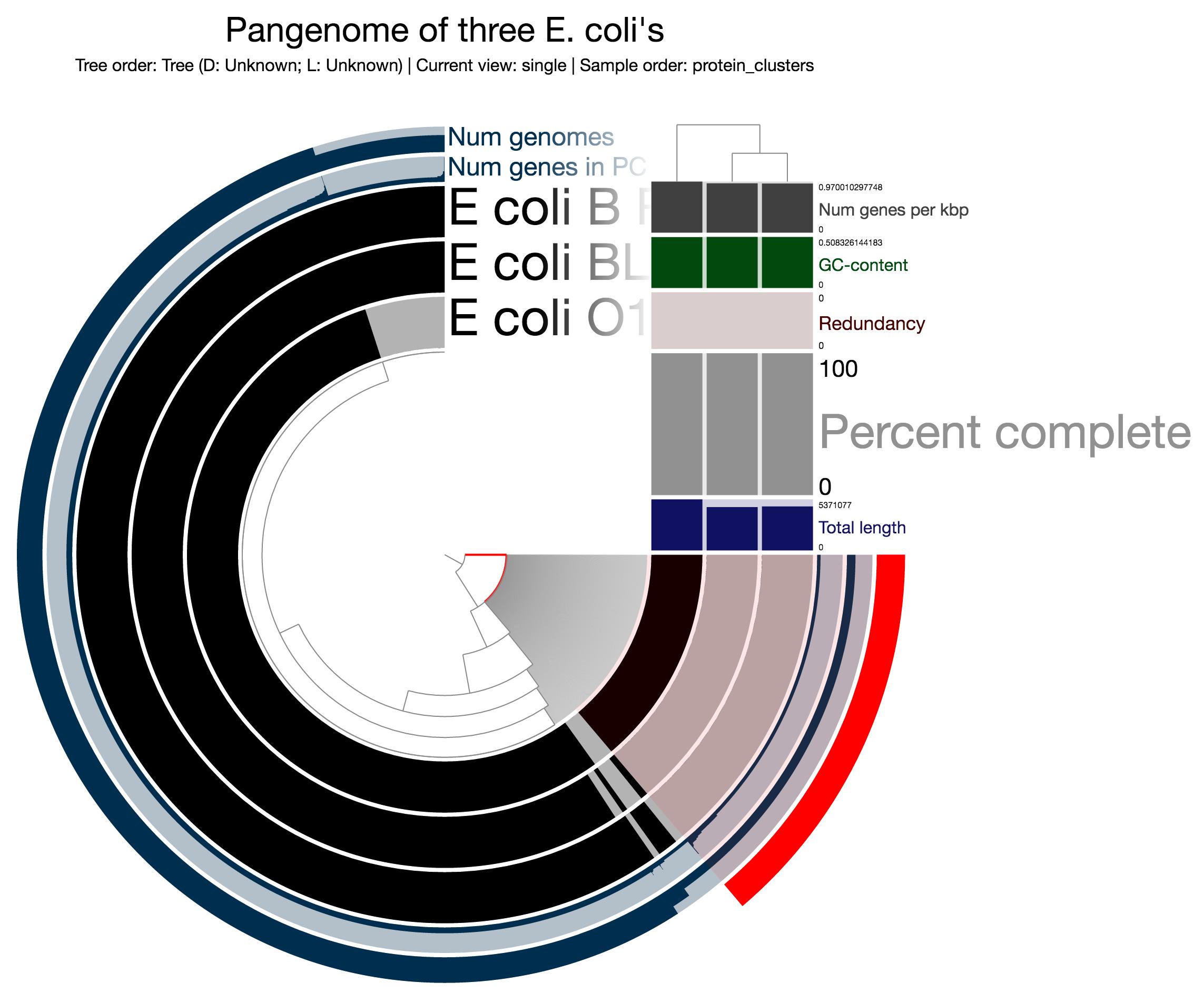E. coli protein clusters